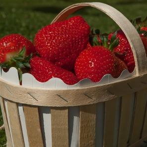 Erdbeeren aus Wiesen
