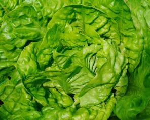 Rikla empfiehlt Blattsalate als Beilage